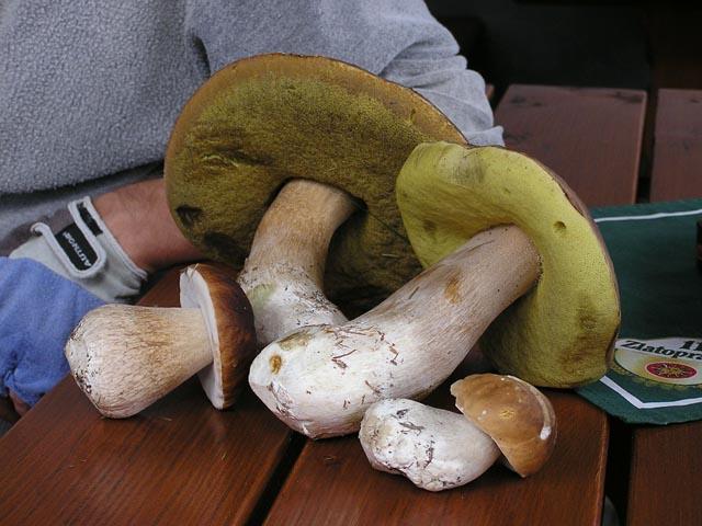 houby05