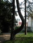 strom12