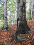 stromy01