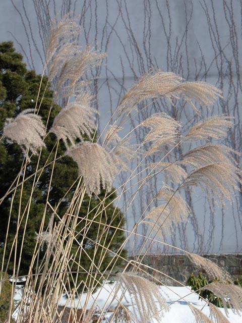 trava01